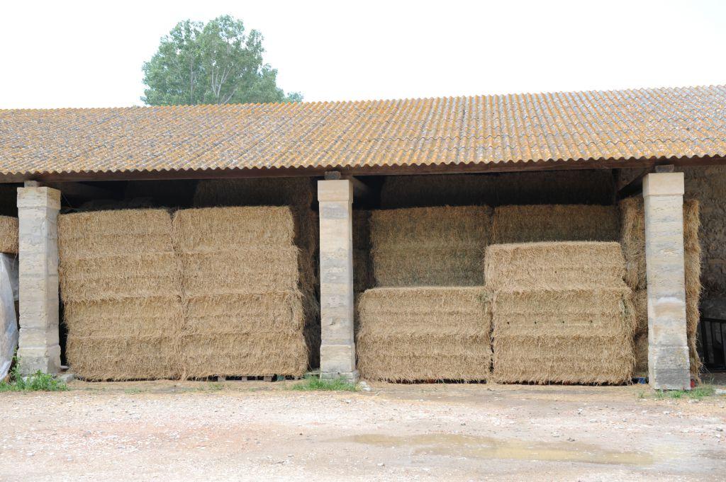vente de foin foin bio pour vaches chevaux ch vres et